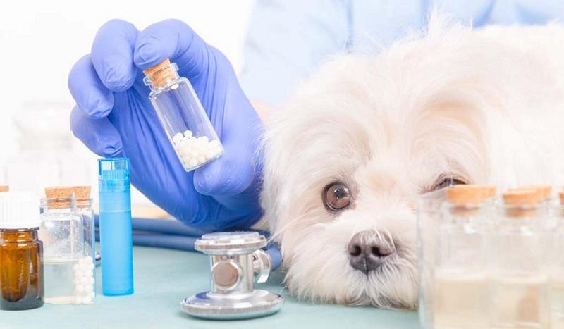 Открыта новая специальность Ветеринария